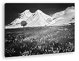 verführerisches Wiese vor denn eisigen Alpen Effekt: Schwarz/Weiß Format: 80x60 als Leinwand, Motiv fertig gerahmt auf Echtholzrahmen, Hochwertiger Digitaldruck mit Rahmen, Kein Poster oder Plakat