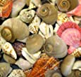 Bumper Bucket of Seashells - 500g