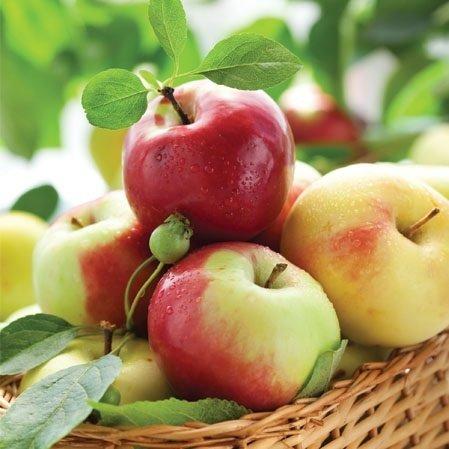 Paw Lunchservietten Design SUNNY APPLES Kollektion Essen Paw Apple Serviette