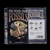 Foxom Groß Kreativ Bergbau Fossilien Ausgrabungsset Spielzeug Set Archäologie...