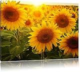 Sonnenblumen auf dem Feld, Format: 80x60 auf Leinwand, XXL riesige Bilder fertig gerahmt mit Keilrahmen, Kunstdruck auf Wandbild mit Rahmen, günstiger als Gemälde oder Ölbild, kein Poster oder Plakat