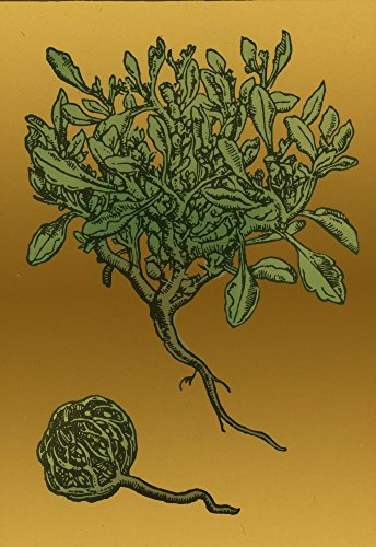 Anastatica Hierochuntica, Resurrection Plant Poster Print by Science Source (24 x 36)