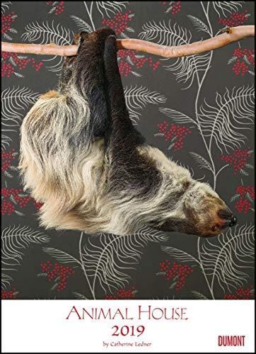 Animal House Kalender 2019 – DUMONT Tier-Kalender – Foto-Kunst – Poster-Format 49,5 x 68,5 cm - Partnerlink