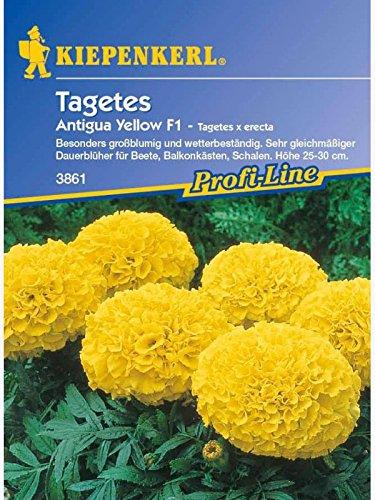 Tagetes erecta Antigua Yellow