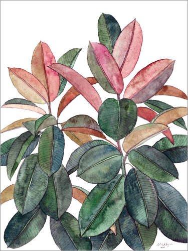 Zimmerpflanze Ficus elastica