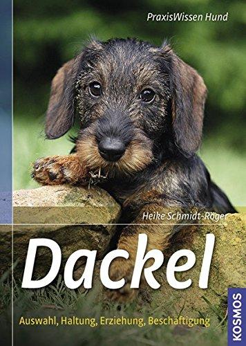 Artikelbild: Dackel: Auswahl, Haltung, Erziehung, Beschäftigung (Praxiswissen Hund)