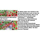 25x Capuchina Variedad A12 Semillas Centro De Atención Planta Trepadora Planta Rareza Flores #96