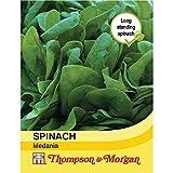 Thompson & Morgan Gemuse Spinat Medania 750 Samen