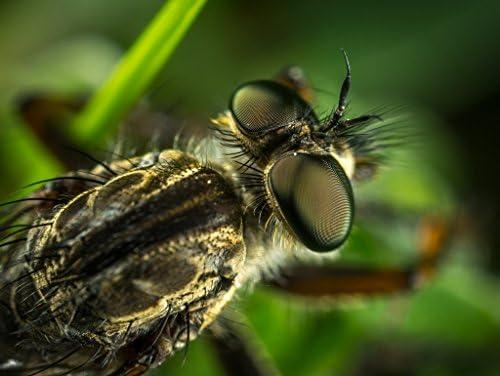 Superbe Rhapsody du Nouvel An, salutations du Nouvel An An An Lais Puzzle Insecte 2000 Pieces   Expédition Rapide  902296