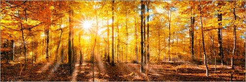 Posterlounge Acrylglasbild 180 x 60 cm: Herbstliches Wald Panorama im Sonnenlicht von Jan Christopher Becke - Wandbild, Acryl Glasbild, Druck auf Acryl Glas Bild