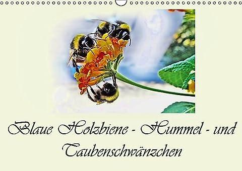 Blaue Holzbiene - Hummel - und Taubenschwänzchen. (Wandkalender 2017 DIN A3 quer): Planer. Kleine Blumen Besucher, zu unseren großen Freude. (Geburtstagskalender, 14 Seiten