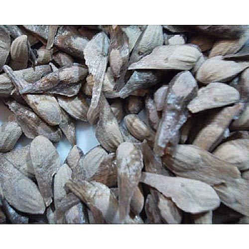 PLAT FIRM GERMINATIONSAMEN: 50 Longleaf Kiefer Samen, Pinus Palustris