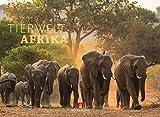 Tierwelt Afrika 2019, Wandkalender im Querformat (45x33 cm) - Tierkalender mit Monatskalendarium