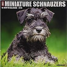 Just Miniature Schnauzers 2019 Wall Calendar (Dog Breed Cale