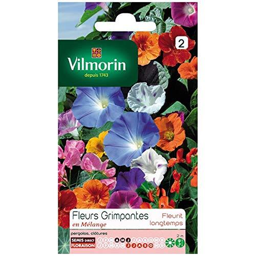 Vilmorin - Sachet graines Fleurs grimpantes en mélange