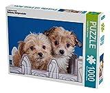 Ein Motiv aus dem Kalender Bolonka Welpenstube 1000 Teile Puzzle quer (CALVENDO Tiere)