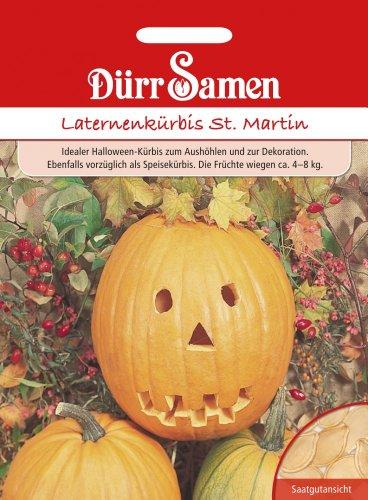 Dürr-Samen Laternen-Kürbis St. Martin