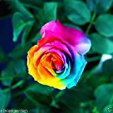 #8: M-Tech Gardens Rare Rainbow Rose Multi Color Grafted Live Plant - 1 Healthy Live PlantRAINBOW ROSE