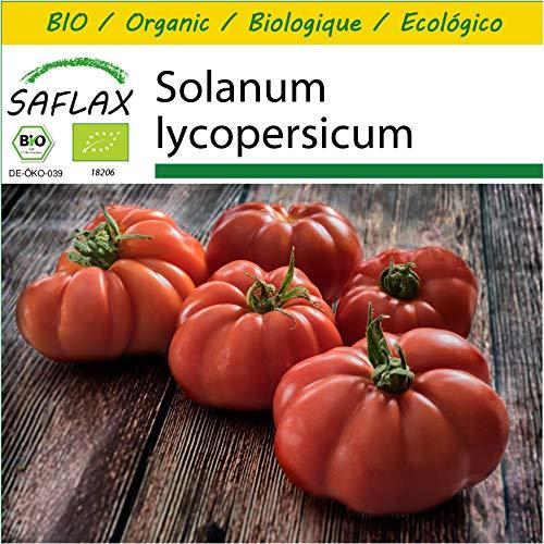 SAFLAX - - Ecológico - Tomate - Rouge de Marmande - 10 semillas - Solanum lycopersicum