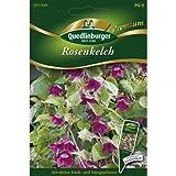 Rosenkelch, Rhodochiton