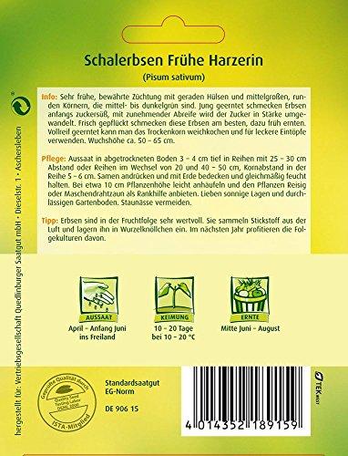 Erbsensamen – Schalerbse Frühe Harzerin von Quedlinburger Saatgut