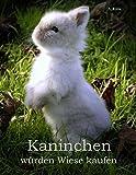 Kaninchen würden Wiese kaufen: Haltung und Ernährung von Zwergkaninchen - Informationen für engagierte Halter