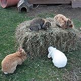 Frisches Bio Wiesenheu von fränkischen Wiesen 10-13kg Ballen Meerschweinchen Kaninchen