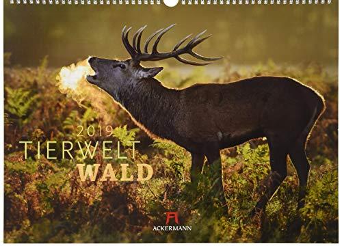 Tierwelt Wald 2019, Wandkalender im Querformat (45x33 cm) - Tierkalender mit heimischen Wildtieren mit Monatskalendarium