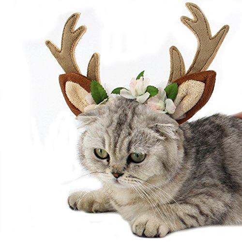 NashaFeiLi Haustier Halloween Hut Hund Party Kappe Katze Kostüm Stirnband Deko Geschenk für Hund Kätzchen