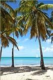 Unbekannt Poster 80 x 120 cm: Palmenstrand mit Segelboot, Martinique von Matteo Colombo - hochwertiger Kunstdruck, neues Kunstposter