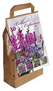 Colour Collection Summer Flowering Bulbs - Purple (Pack of 50)