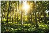 Wallario Garten-Poster Outdoor-Poster - Sonnenstrahlen im Nadelwald mit Moos und Farn in Premiumqualität, Größe: 61 x 91,5 cm, für den Außeneinsatz geeignet