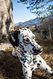 Such a Cute Dalmatian Dog Pet Journal: Lined Notebook/Diary
