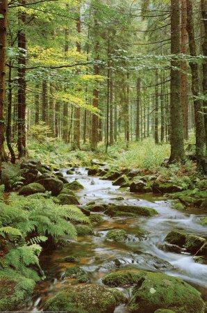 Poster 'Bachlauf im Wald', Größe: 61 x 91 cm