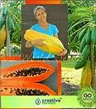 Pinkdose Taiwan Papaya Lady Hybrid Pappaya Samen Fruit Seeds Seed