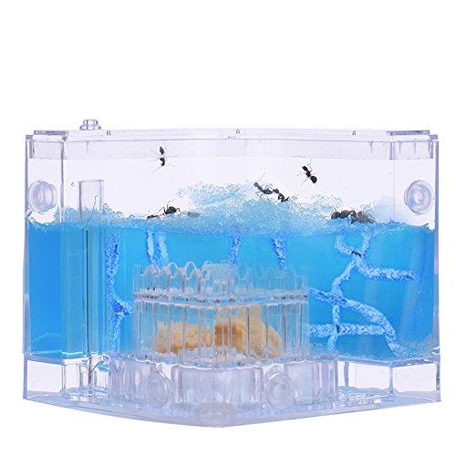 TAONMEISU™ Labyrinthe Acrylique Vivarium Fourmis Gel Nutritif en Bleu Habitat de Fourmis