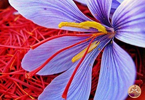 SABOREATE Y CAFE THE FLAVOUR SHOP Azafrán en Hebra Orgánico Estigma Entero De Flor 2 gramos