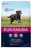 Eukanuba Premium Hundefutter für Hunde großer Rassen, Trockenfutter mit Huhn (1 x 3 kg)