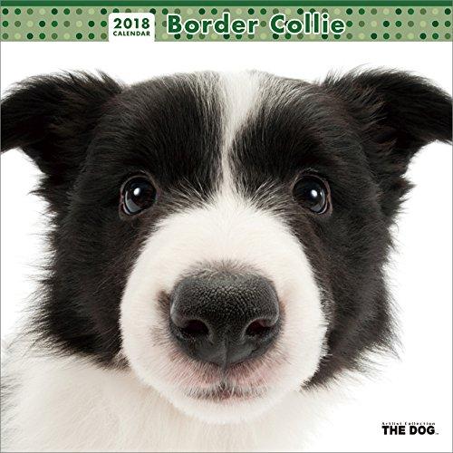 THE DOG Wall Calendar 2018 Border Collie