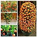 Fruit & Fruit Trees
