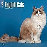Ragdoll Cats - Ragdoll-Katzen 2018-18-Monatskalender: Original BrownTrout-Kalender [Mehrsprachig] [Kalender] (Wall-Kalender)