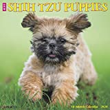 Just Shih Tzu Puppies 2020 Calendar