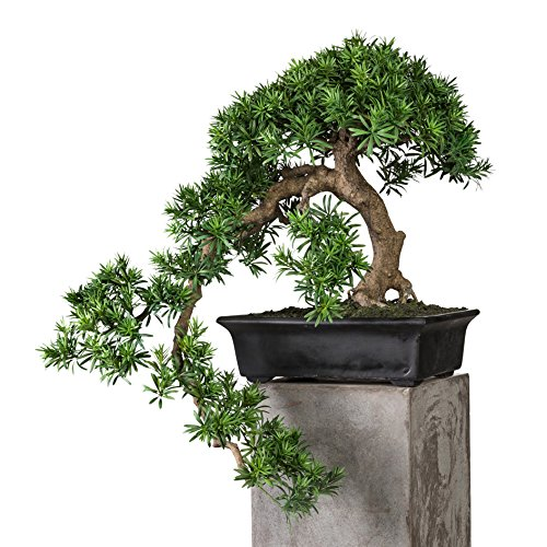 wohnfuehlidee Kunstpflanze Bonsai Podocarpus Kengai Grün, Inklusive Fibrecement-Schale, ca.70/90 cm