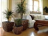 Casa Mina 3er Set Wasserhyazinthe Blumenkübel Übertöpfe Pflanzkübel Blumentopf Madras WWB braun 50/40/30cm hoch