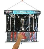 Caly 027F Gesellschaftsspiel Anatomie und Stethoskop