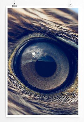 Best for home Artprints - Tierfotografie - Detail eines Adlerauge- Fotodruck in gestochen scharfer Qualität