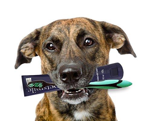 Pet Dentist PDTB1