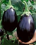 Aubergine Black Beauty - Eierfrucht - 100 Samen