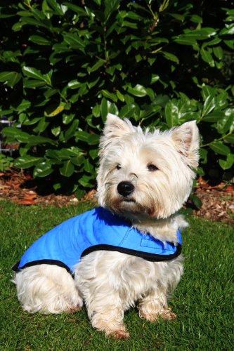 manteau pour chien rafraichissant
