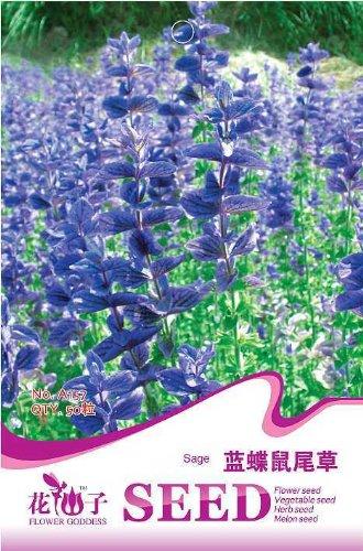 semillas-de-arboles-podocarpus-yacca-de-semillas-de-arboles-de-arboles-arbustos-de-hoja-perenne-en-m